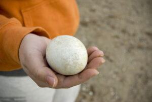 A closeup of a large duck or goose egg resting in the palm of this hand.